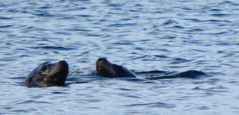 Why You Should Try Swimming with Seals